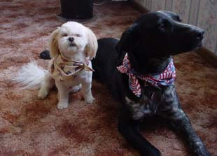 Pet Scarfs in small and large size